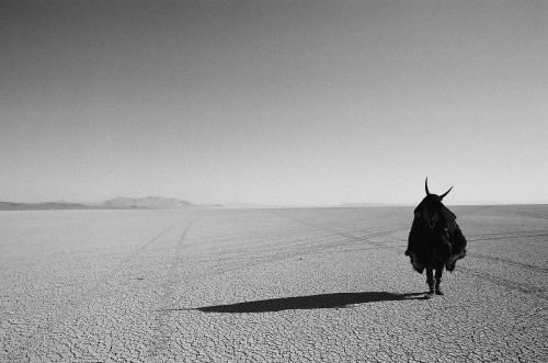 Shaman Exterminator on the Playa